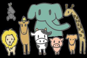 哺乳類の動物たち